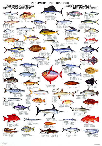 Image gallery list names of fish for Names of fish to eat