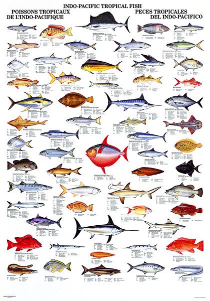 aquarium fish pictures and names pdf 2017 - Fish Tank Maintenance