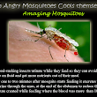 How Angry Mosquitoes Cools themselves – Amazing fact