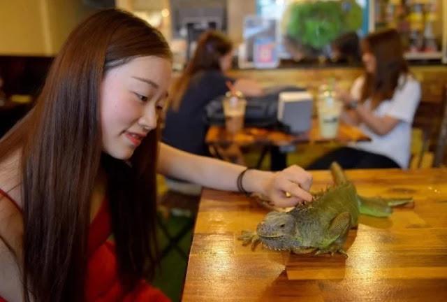 इस कैफ़े में चाय-कॉफी के साथ परोसे जाते हैं सांप और अजगर! - newsonfloor.com