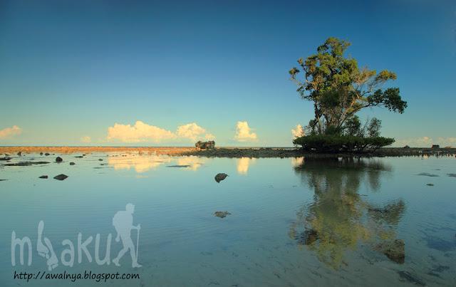 Pohon bakau di kawasan pantai Buraen