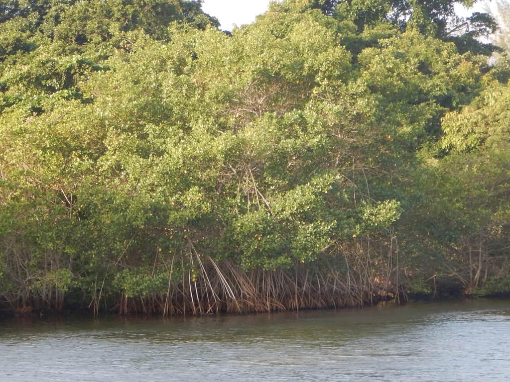 Lagoa de Marapendi Barra da Tijuca