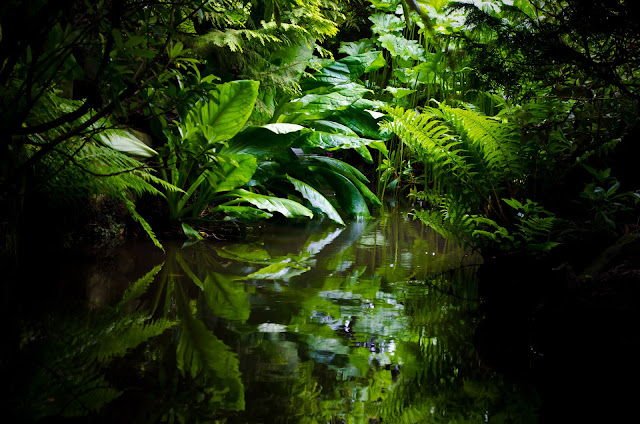 facts you didn't know about the amazon rainforest