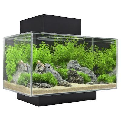 Rekomendasi Filter Aquarium Ukuran 60cm Murah