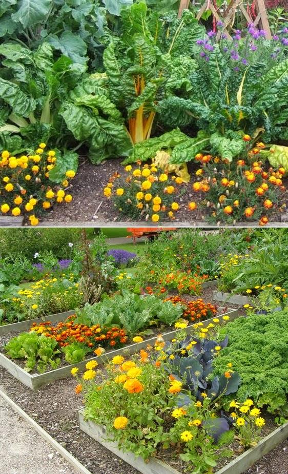 Vegetable Companion Planting Guide #vegetable_gardening ...