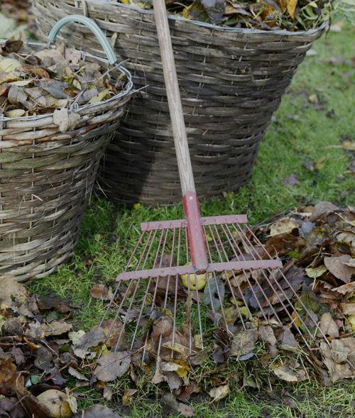 Limpiando jardín