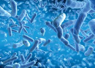 Pengertian, Jenis-Jenis dan Contoh Pemanfaatan Mikroorganisme Dalam Kehidupan Sehari-Hari