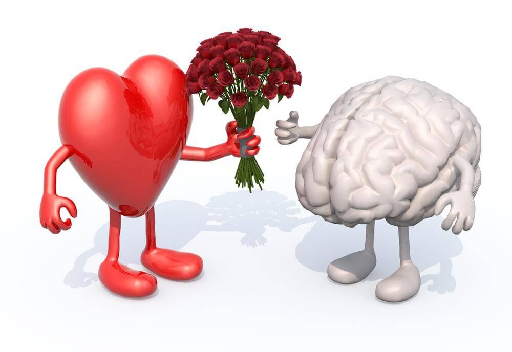 Ungewöhnlich Blutzufuhr Zum Gehirn Anatomie Zeitgenössisch ...