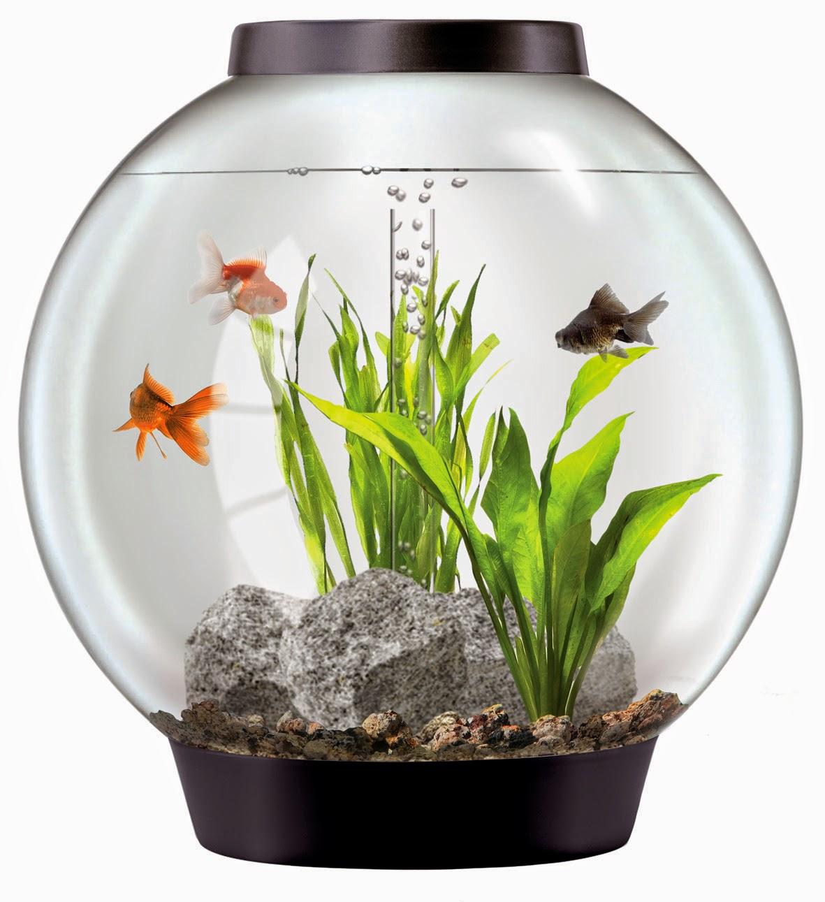 Hiasan Aquarium Bulat