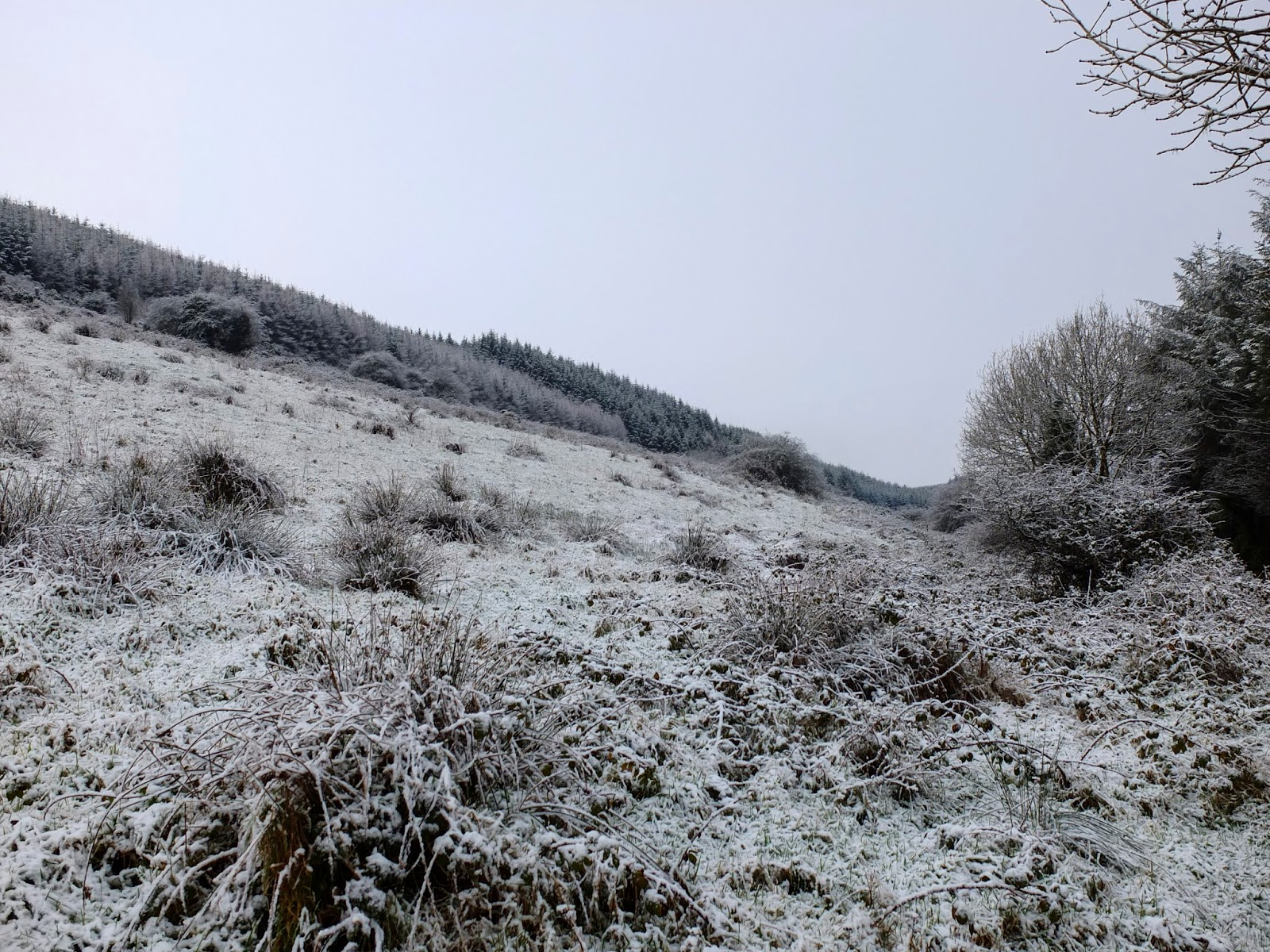 A hillside in Duhallow covered in snow captured in December 2017.