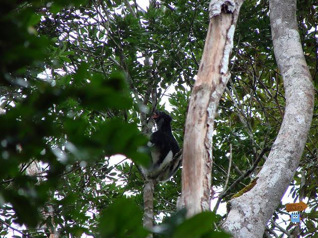 Madagascar: Analamazaotra
