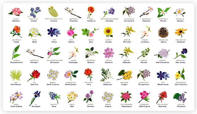 List Of Different Types Of Flowers