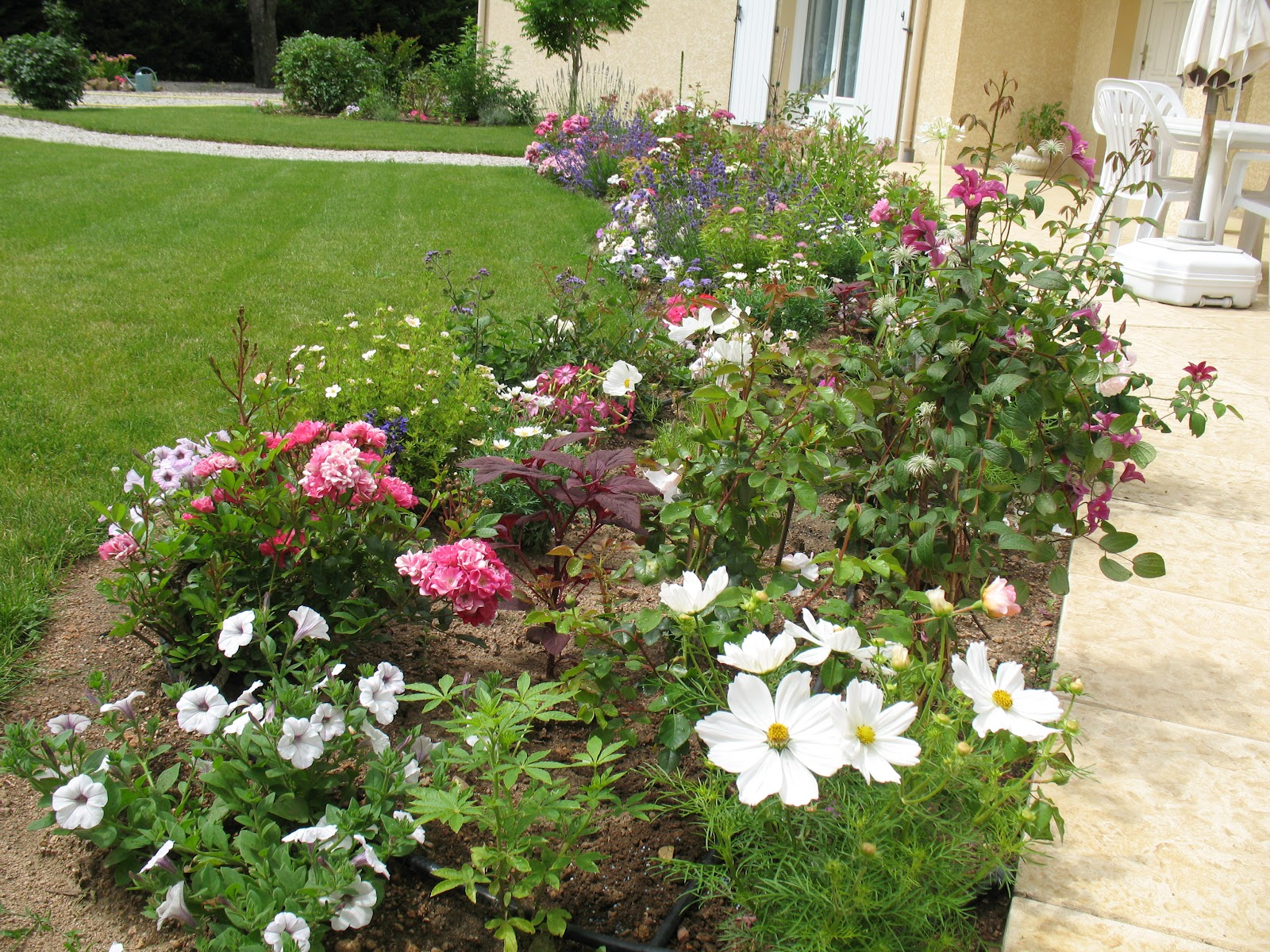 roses du jardin ch neland cr ation d 39 une plate bande. Black Bedroom Furniture Sets. Home Design Ideas