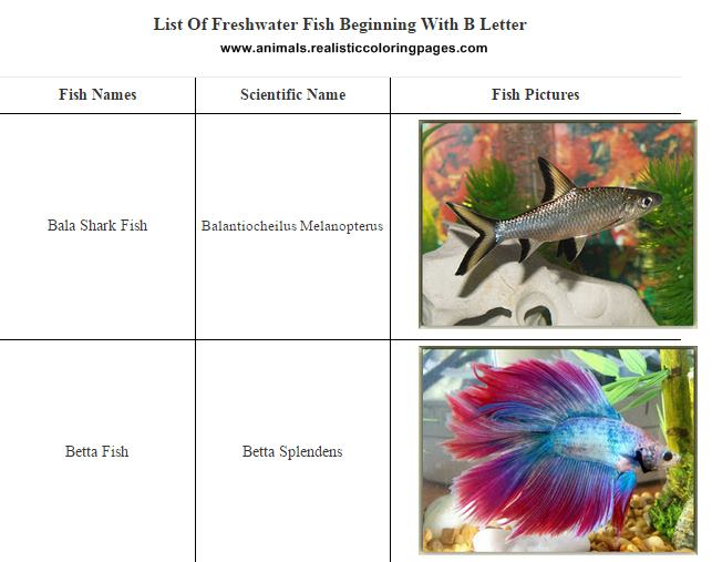 List Of Freshwater Fish Beginning With B