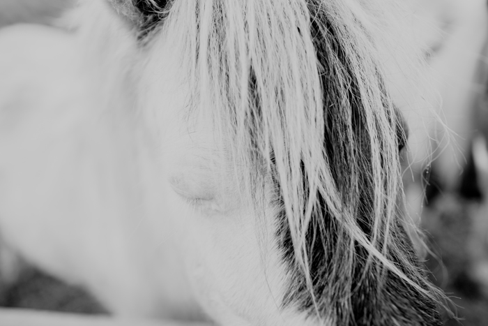 horse photo close up
