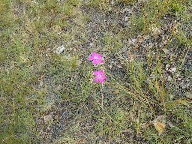 цветы на берегу озера Большие Касли