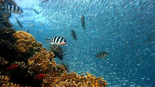 tu upaya pencegahan kerusakan dan perbaikan keanekaragaman hayati dan biota maritim Kabar Terbaru- KONSERVASI LAUT DI INDONESIA