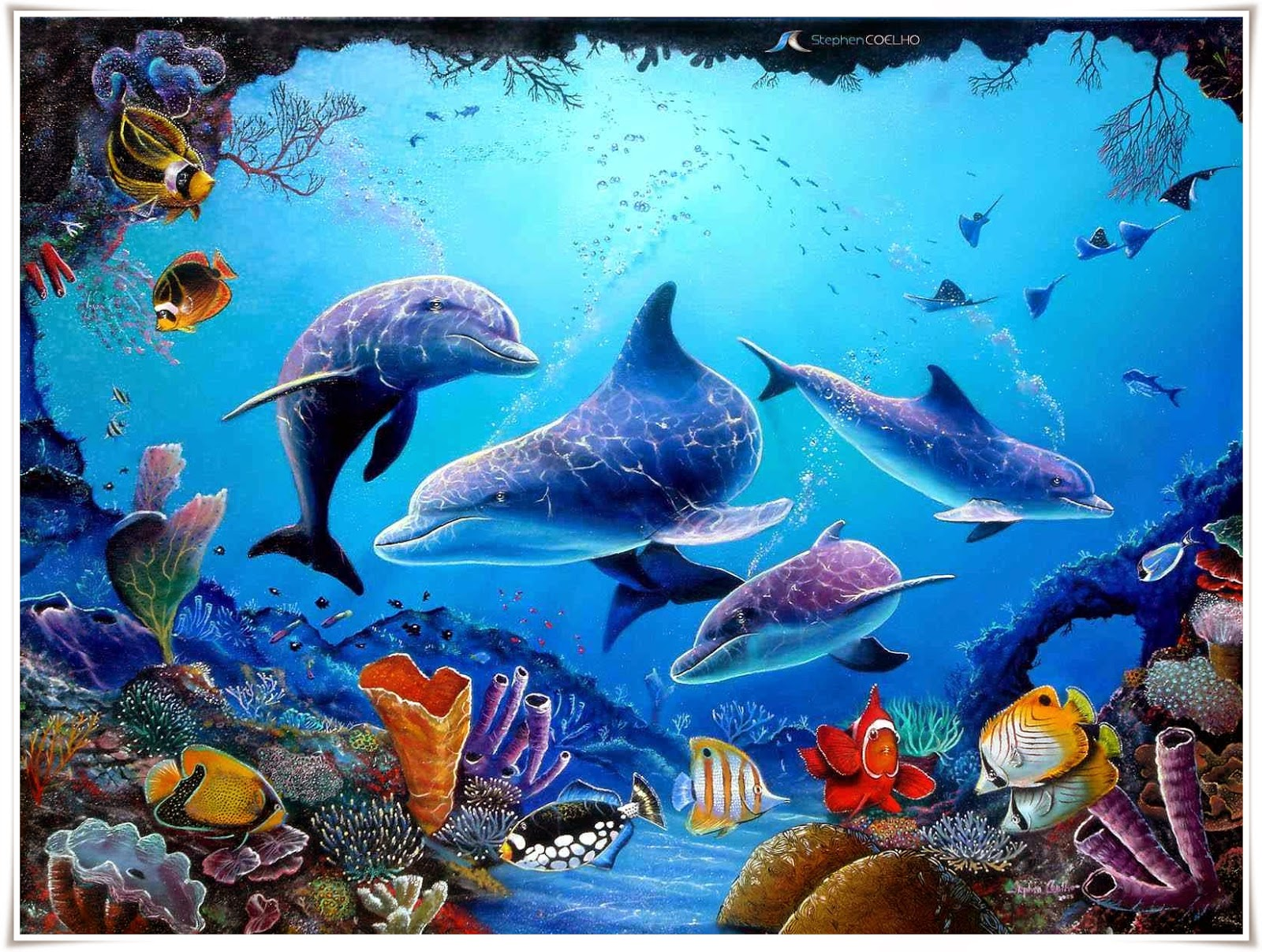 gambar wallpaper ikan lumba lumba