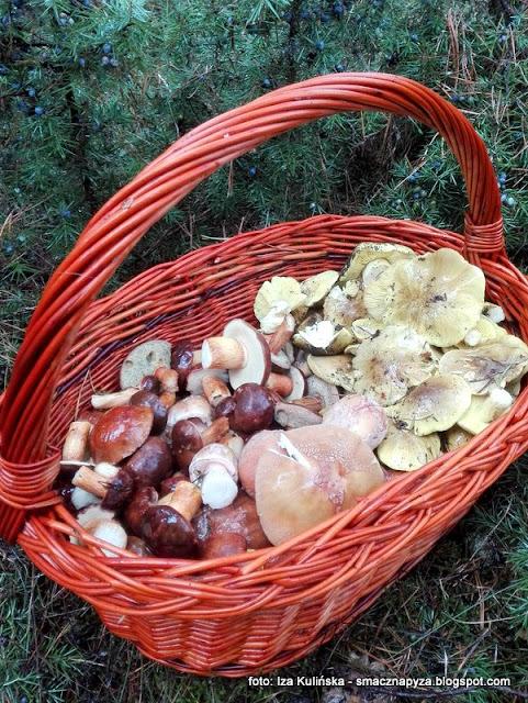 prosto z lasu, las, na grzyby, pazdziernik, grzybki, koszyk, zbieranie grzybow, sport narodowy, lubie grzyby