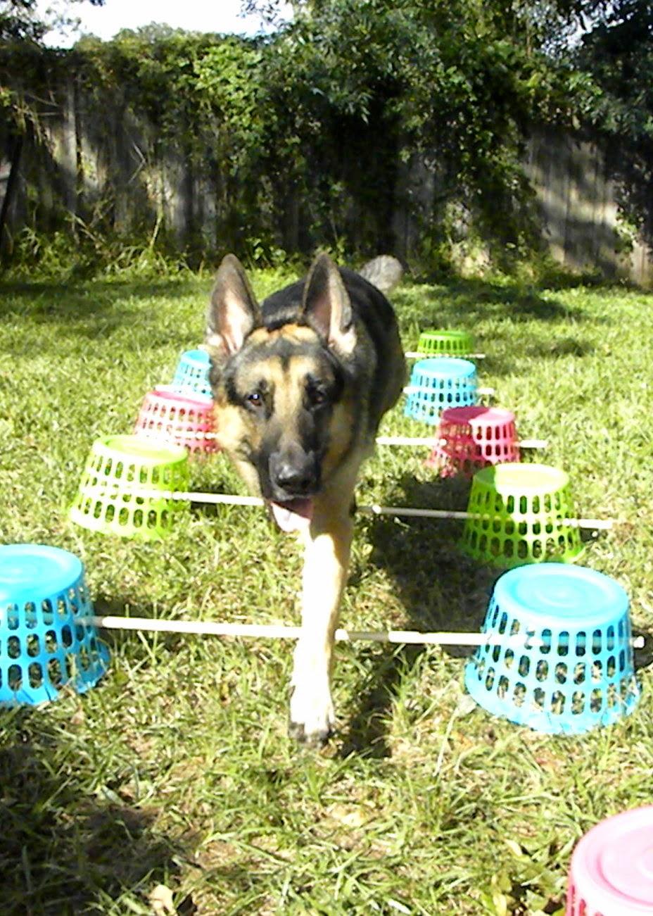 Diy Dog Playground Cheap