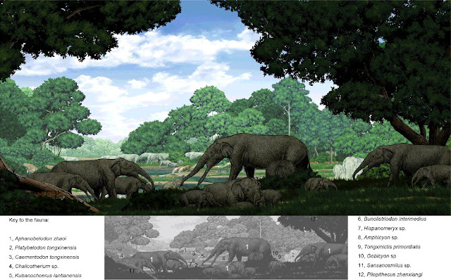 New prehistoric elephant ancestor found in China