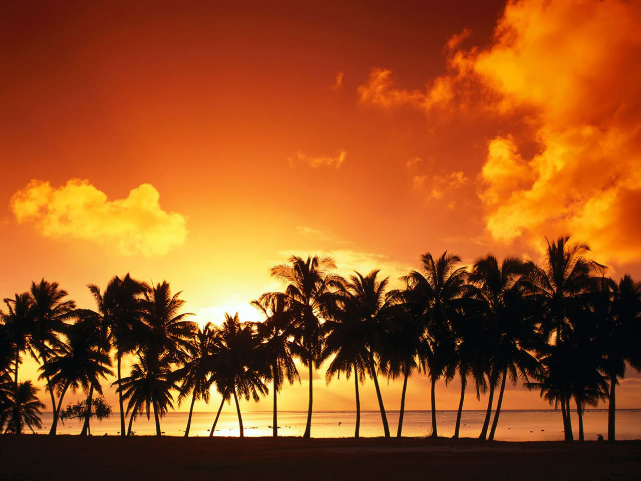 Sunset Over Beach Of Palm Trees Hd Wallpaper: Sunset Behind The Trees
