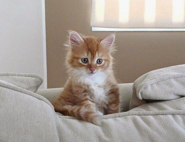 Imagen gatito colorin con mirada melancolica