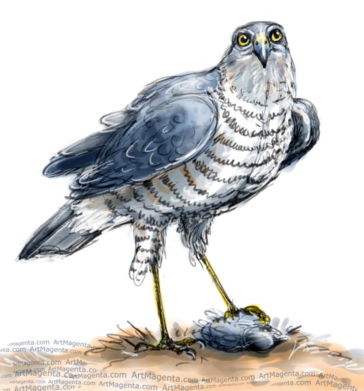 Sparrowhawk sketch painting. Bird art drawing by illustrator Artmagenta