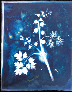 Wet cyanotype_Sue Reno_Image 590