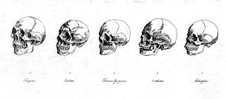 Until Darwin: Science & the Origins of Race: Race & Races