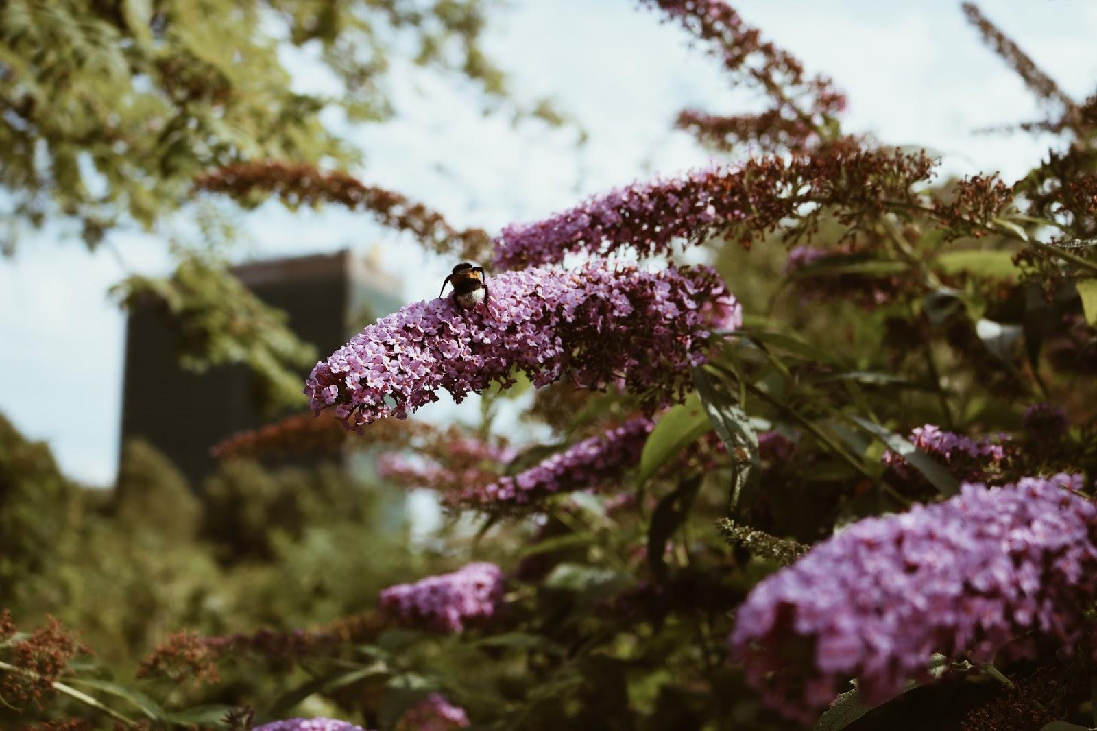 botanische-tuinen-utrecht