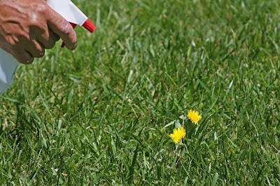 Natural Grass Killer For Vegetable Gardens