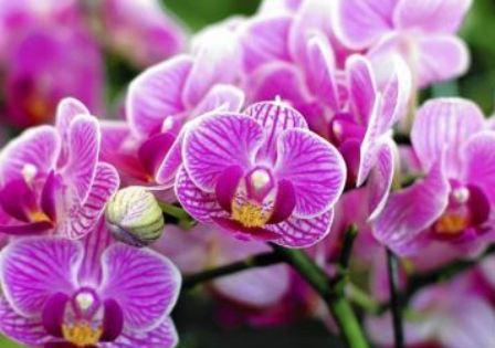 22 Khasiat Bunga Anggrek Untuk Kesehatan Dan Kecantikan