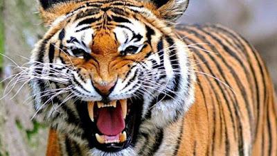 Binatang Berbahaya Di Dunia Yang Mengerikan