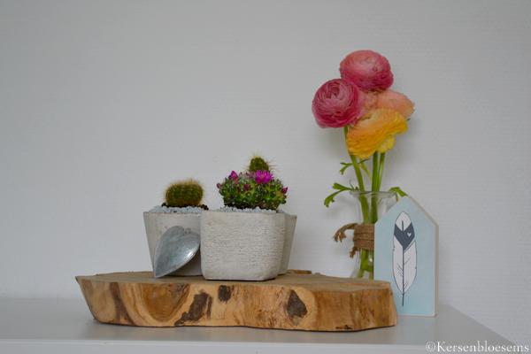 Kersenbloesems: Cactus hoekje