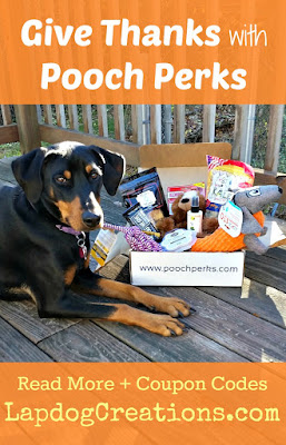 doberman mix dog with Pooch Perks box