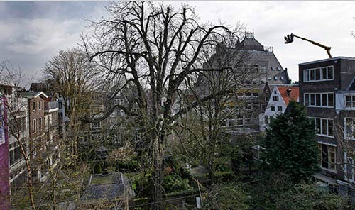 Pohon Keramat Saksi Sejarah Peradaban Manusia