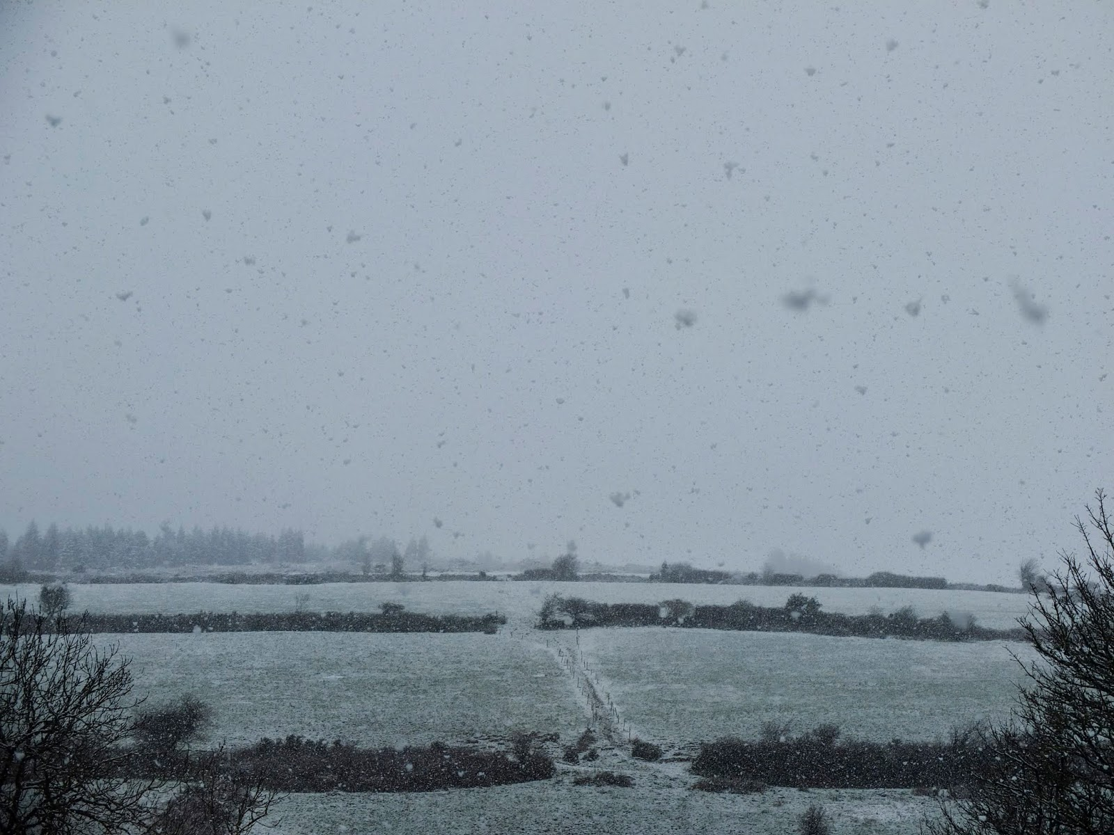 Snowflakes falling from the sky in the Boggeragh Mountains, Co.Cork.