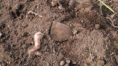 古墳時代か奈良・平安時代の土師器甕片が出てきました