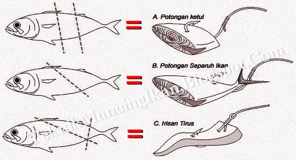 Cara Pasang Umpan Ikan Potong