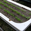 wicking bed