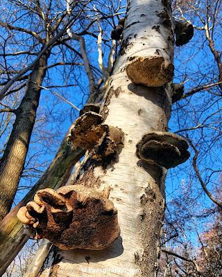 Paddenstoelen op boom - Brabant is open & Breda brengt het samen