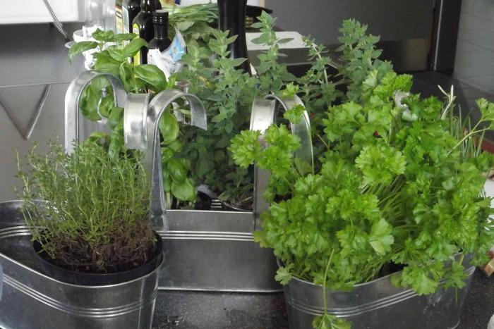 plantas aromáticas culinarias