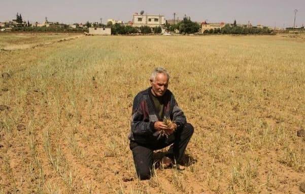 جدل بين فلاحي السويداء وصندوق التخفيف من اثار الجفاف حول تعويض مزارعي القمح والشعير
