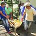 VIDEOS: Muere león del zoológico de Moca cuando intentaban trasladarlo al Distrito