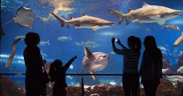 Ingressos para o aquarium de barcelona dicas de for Aquarium de barcelona