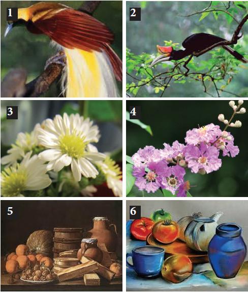 31 Gambar Pemandangan Flora Fauna Dan Alam Benda