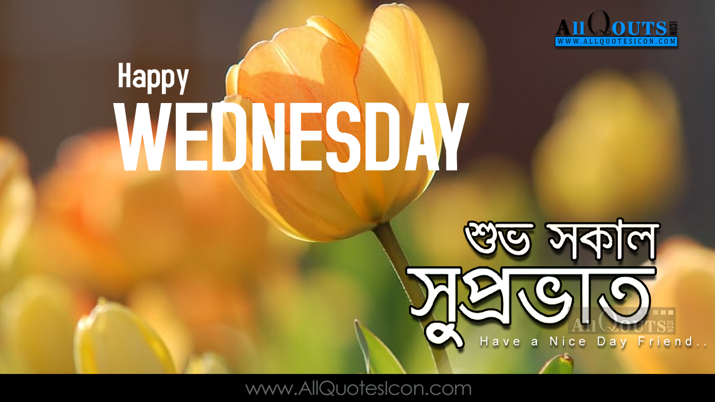 Good Morning Quotes Bengali : Happy wednesday quotes wallpapers best good morning