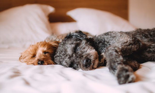 4 Tips for Curing Insomnia in Dogs