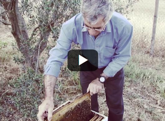 Έμπειρος μελισσοκόμος απο την Κύπρο δίνει απλόχερα μελισσοκομική γνώση video